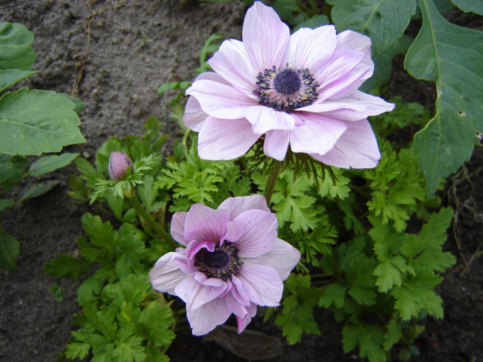 Коллекция цветов котовск 68